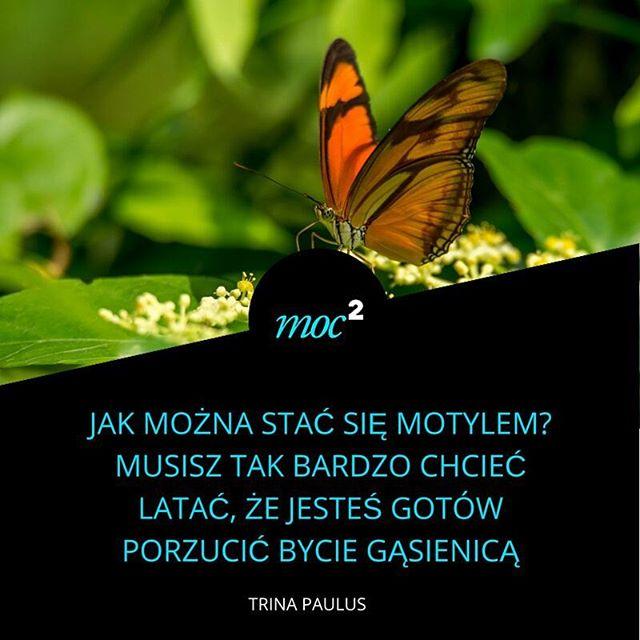 Jak stać się motylem? #zmiana #rozwój #rozwojosobisty